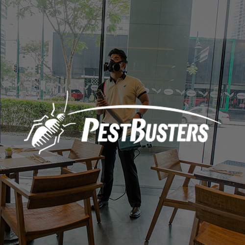 How PestBusters Stays Ahead